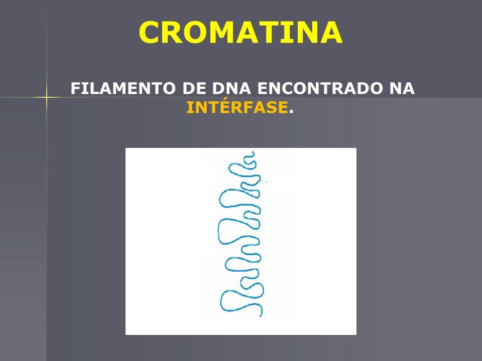 FILAMENTO DE DNA ENCONTRADO NA INTÉRFASE.