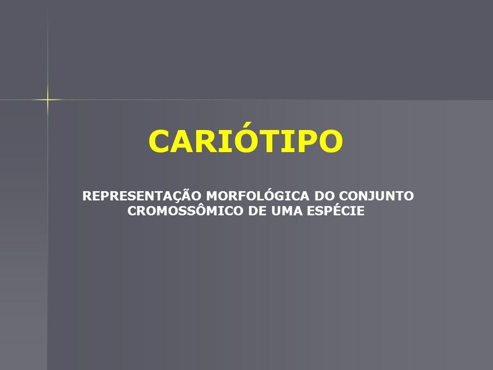 REPRESENTAÇÃO MORFOLÓGICA DO CONJUNTO CROMOSSÔMICO DE UMA ESPÉCIE