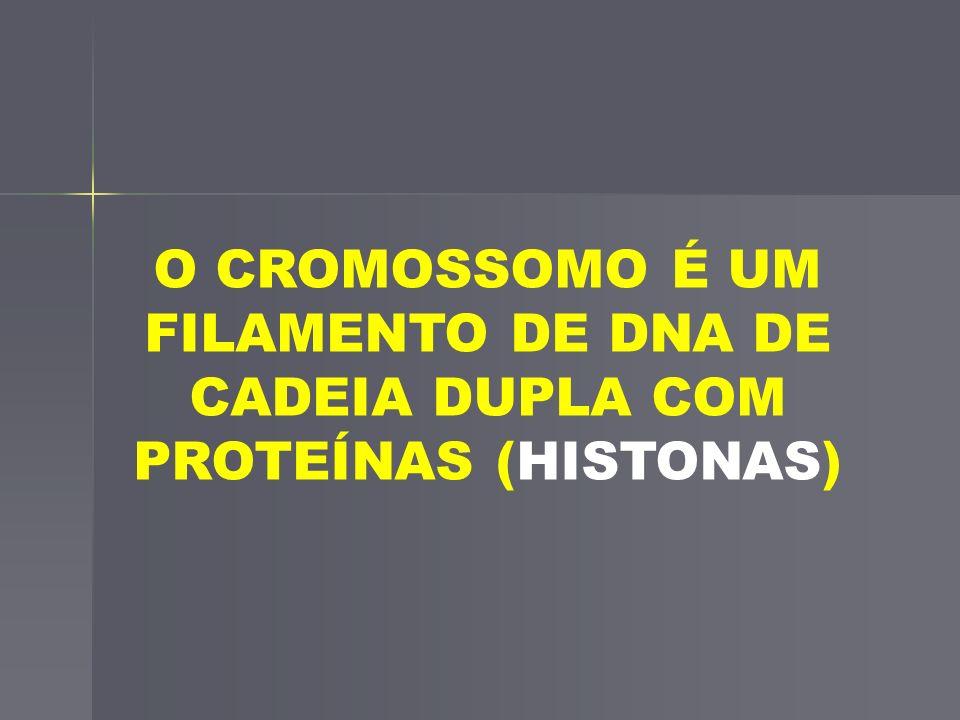 O CROMOSSOMO É UM FILAMENTO DE DNA DE CADEIA DUPLA COM PROTEÍNAS (HISTONAS)