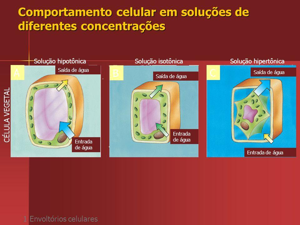 Comportamento celular em soluções de diferentes concentrações