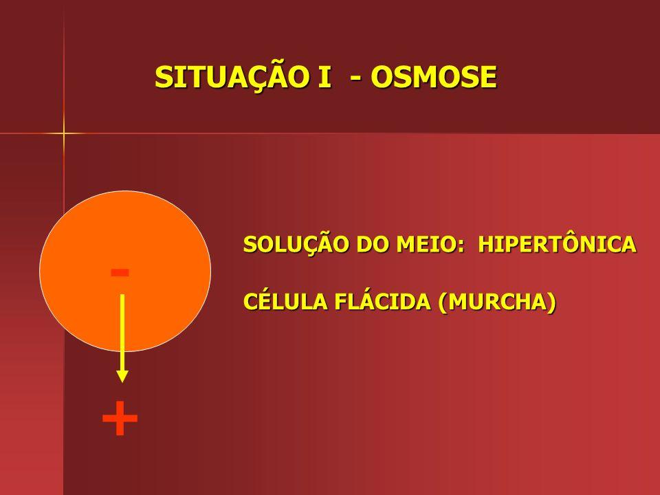 - + SITUAÇÃO I - OSMOSE SOLUÇÃO DO MEIO: HIPERTÔNICA