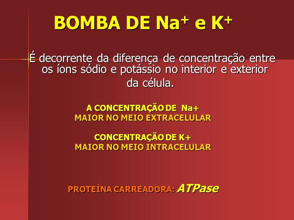 BOMBA DE Na+ e K+ da célula. A CONCENTRAÇÃO DE Na+