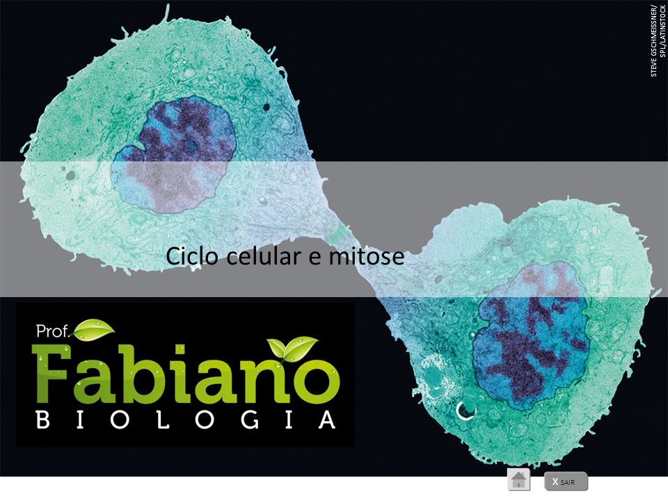 STEVE GSCHMEISSNER/ SPL/LATINSTOCK Ciclo celular e mitose X SAIR
