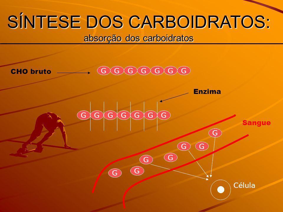 SÍNTESE DOS CARBOIDRATOS: absorção dos carboidratos