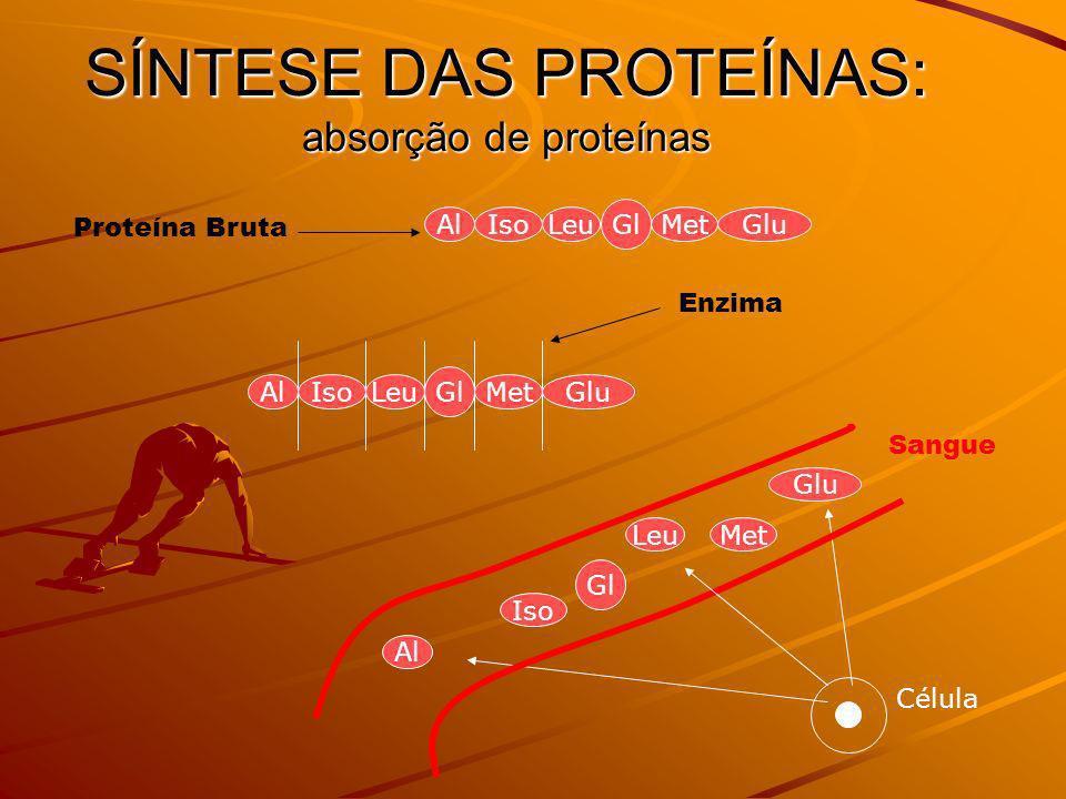 SÍNTESE DAS PROTEÍNAS: absorção de proteínas