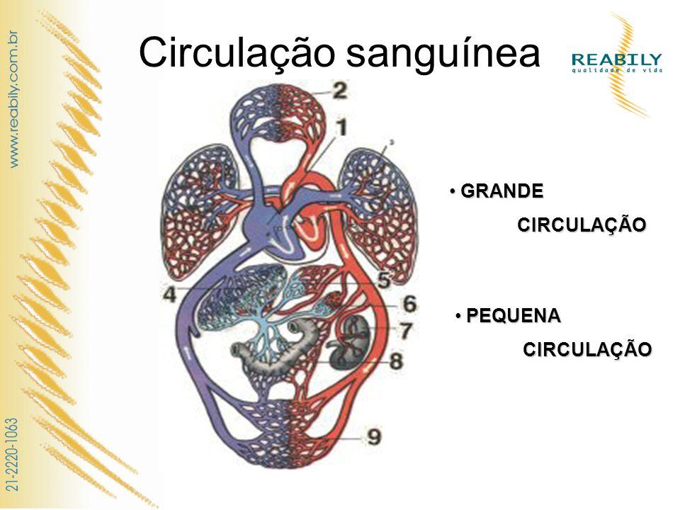 Circulação sanguínea GRANDE CIRCULAÇÃO PEQUENA CIRCULAÇÃO