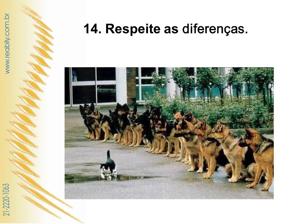 14. Respeite as diferenças.