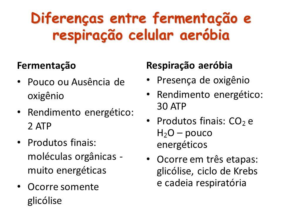 Diferenças entre fermentação e respiração celular aeróbia