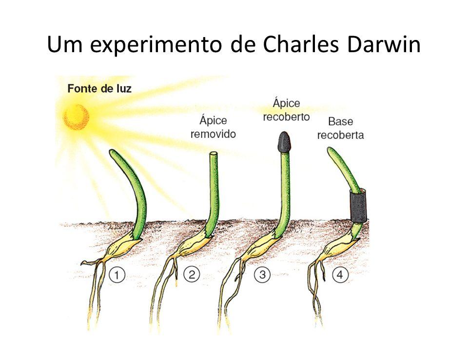 Um experimento de Charles Darwin