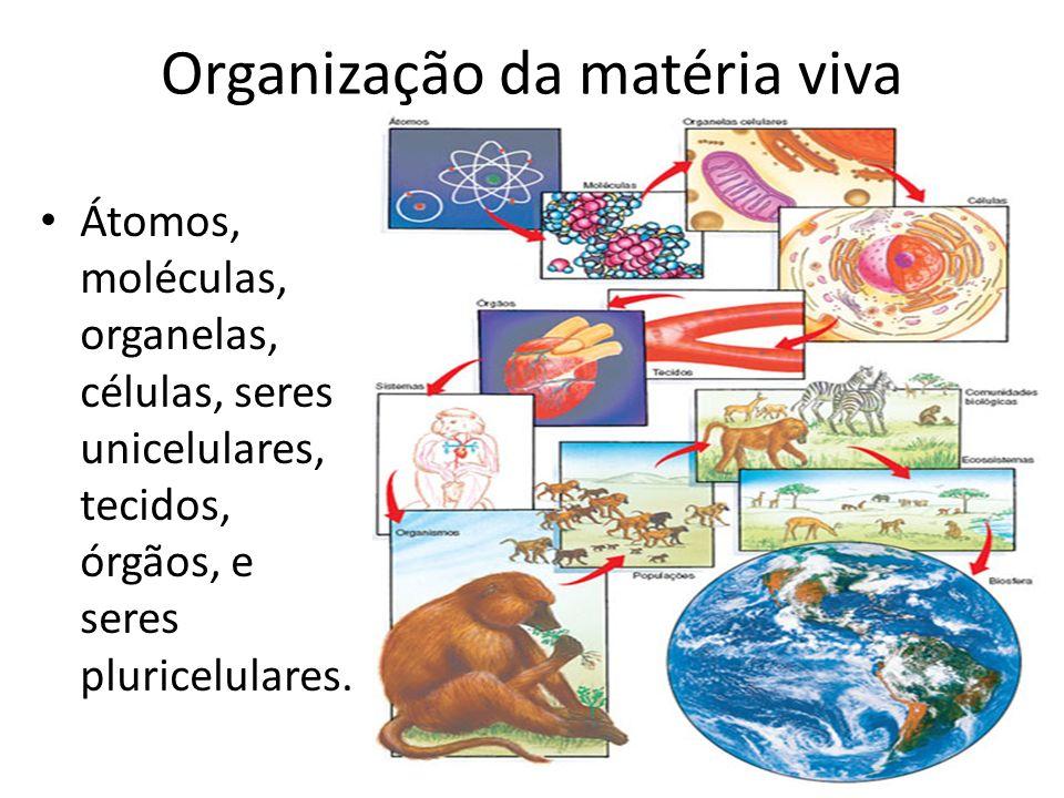 Organização da matéria viva