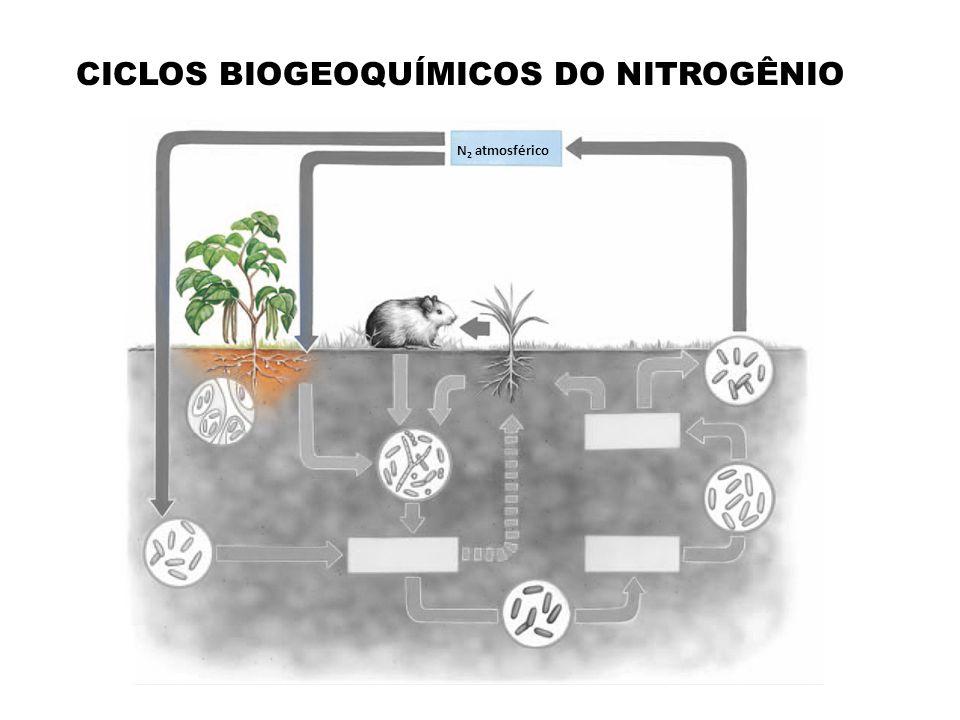 CICLOS BIOGEOQUÍMICOS DO NITROGÊNIO