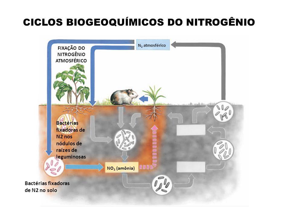 FIXAÇÃO DO NITROGÊNIO ATMOSFÉRICO