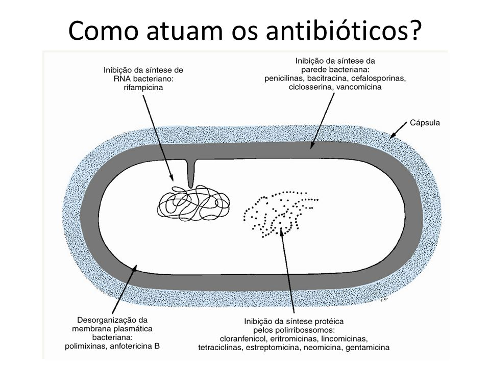 Como atuam os antibióticos