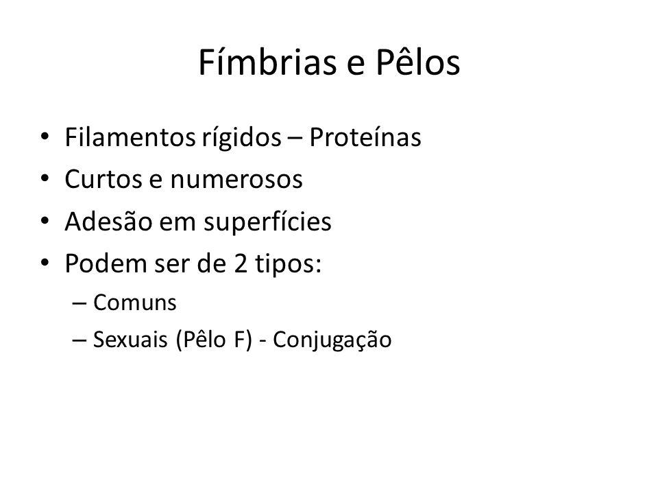 Fímbrias e Pêlos Filamentos rígidos – Proteínas Curtos e numerosos