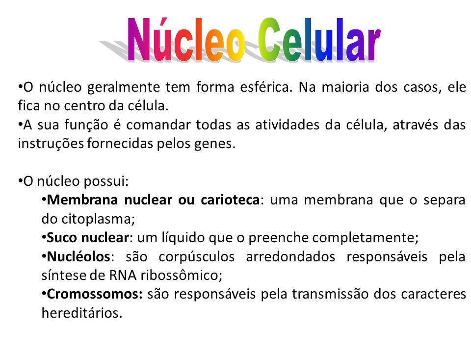 Núcleo Celular O núcleo geralmente tem forma esférica. Na maioria dos casos, ele fica no centro da célula.