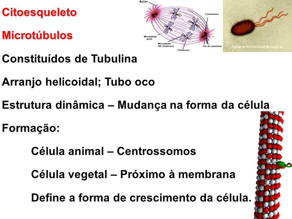 Citoesqueleto Microtúbulos. Constituídos de Tubulina. Arranjo helicoidal; Tubo oco. Estrutura dinâmica – Mudança na forma da célula.