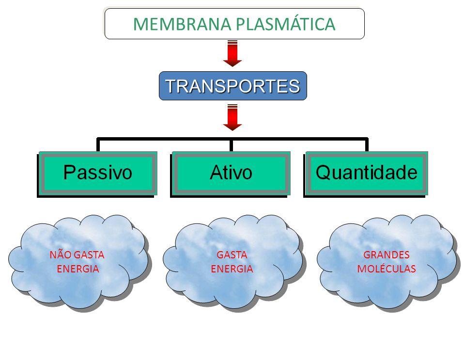 MEMBRANA PLASMÁTICA TRANSPORTES NÃO GASTA ENERGIA GASTA ENERGIA