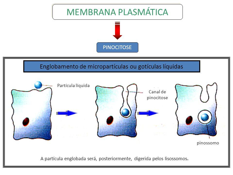 PINOCITOSEMEMBRANA PLASMÁTICA. Englobamento de micropartículas ou gotículas líquidas. Partícula líquida.