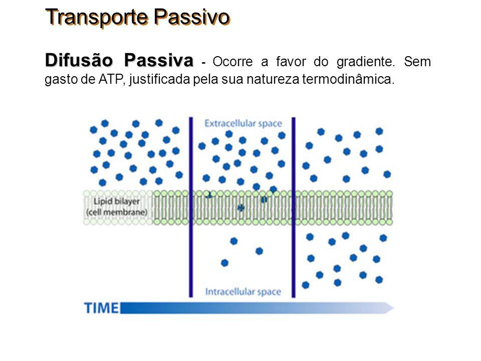 Transporte Passivo Difusão Passiva - Ocorre a favor do gradiente.