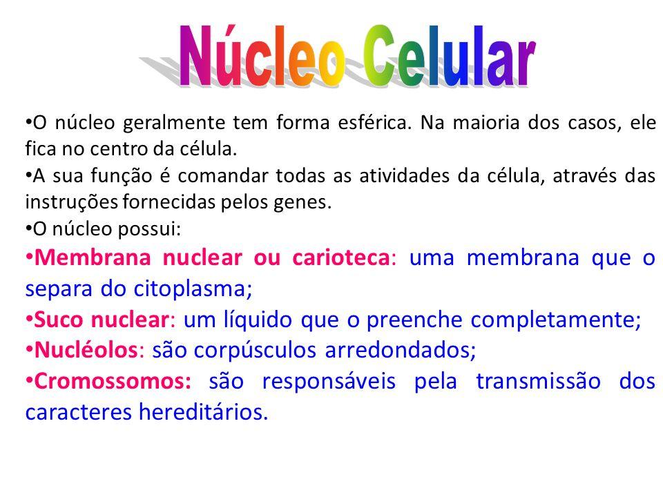 Núcleo CelularO núcleo geralmente tem forma esférica. Na maioria dos casos, ele fica no centro da célula.