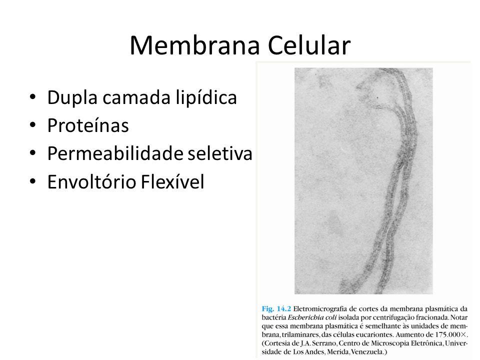 Membrana Celular Dupla camada lipídica Proteínas