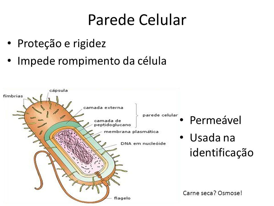 Parede Celular Proteção e rigidez Impede rompimento da célula