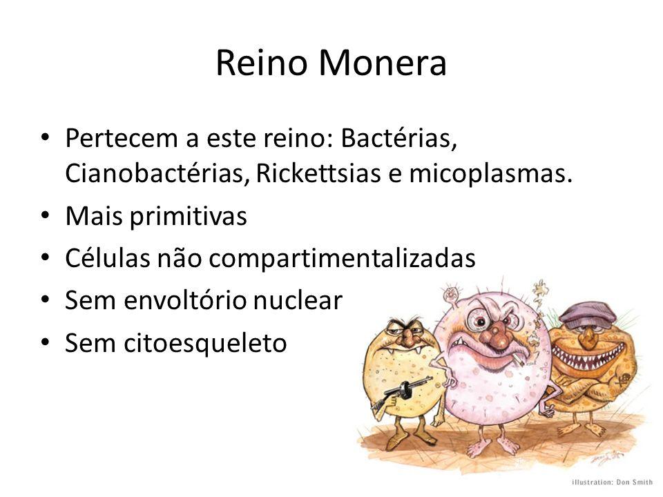 Reino MoneraPertecem a este reino: Bactérias, Cianobactérias, Rickettsias e micoplasmas. Mais primitivas.