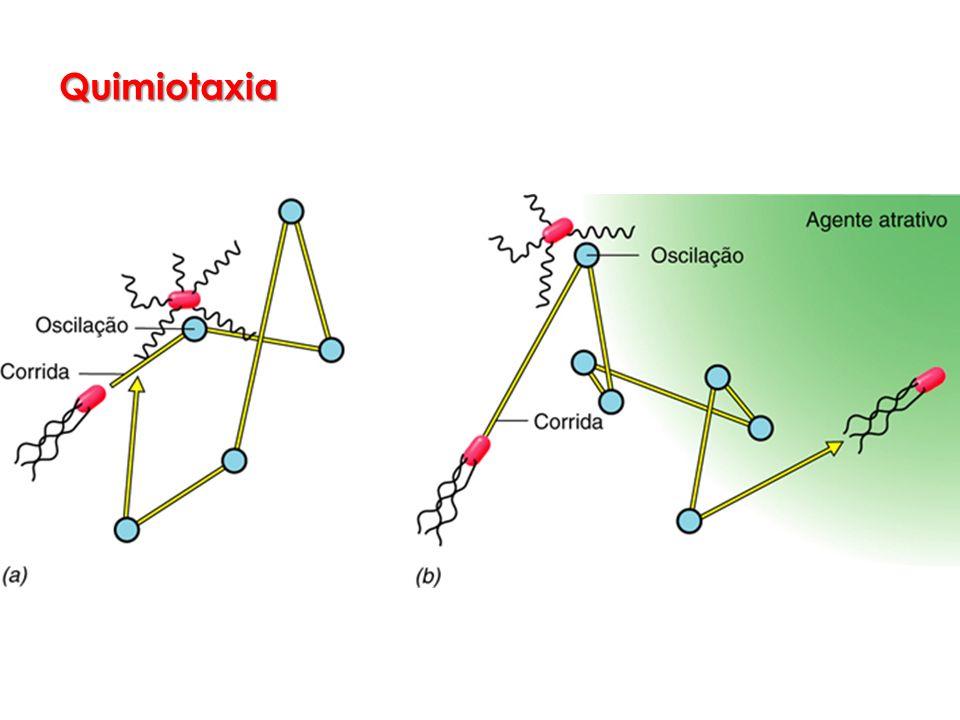 Quimiotaxia