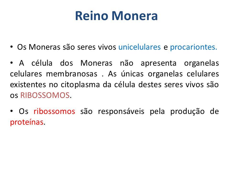 Reino Monera Os Moneras são seres vivos unicelulares e procariontes.