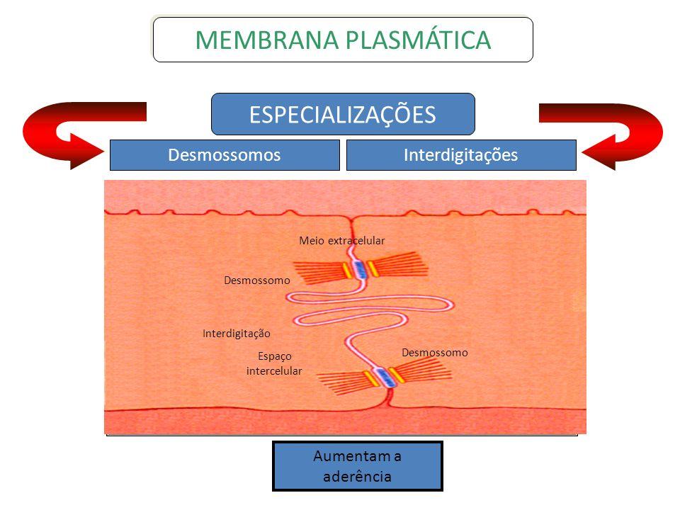 MEMBRANA PLASMÁTICA ESPECIALIZAÇÕES Desmossomos Interdigitações