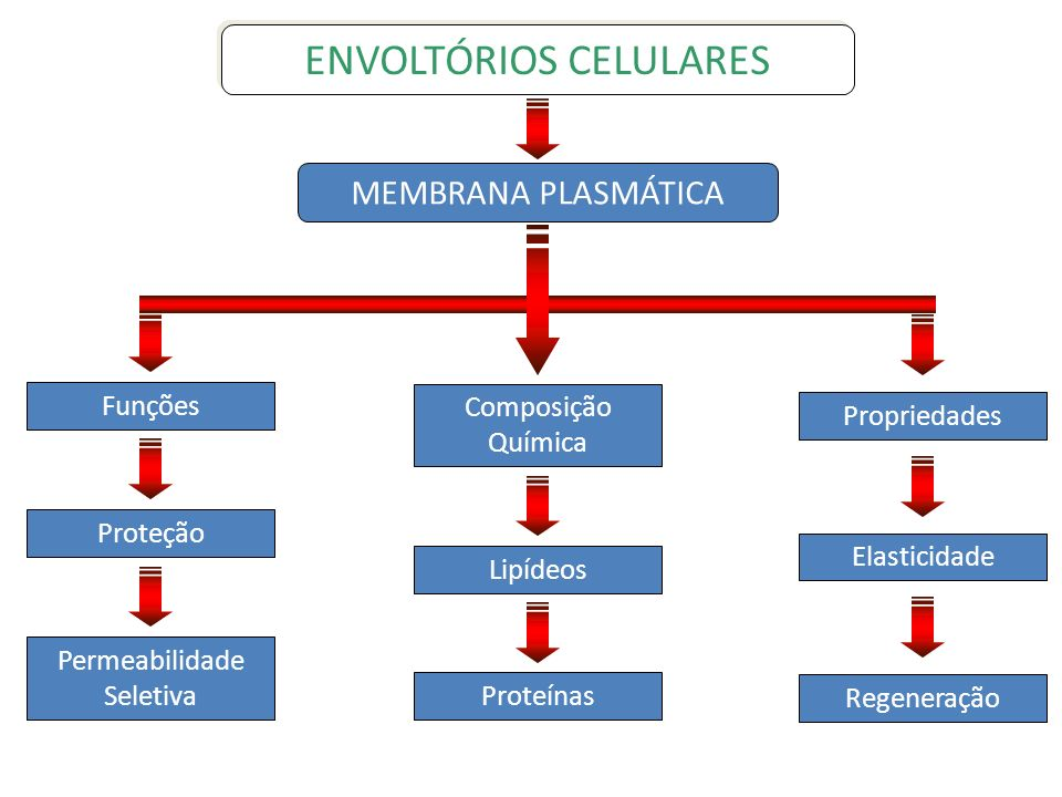 ENVOLTÓRIOS CELULARES