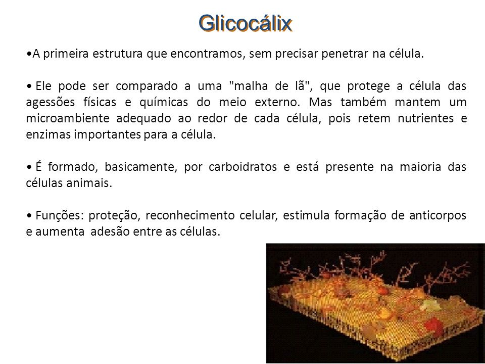 Glicocálix A primeira estrutura que encontramos, sem precisar penetrar na célula.