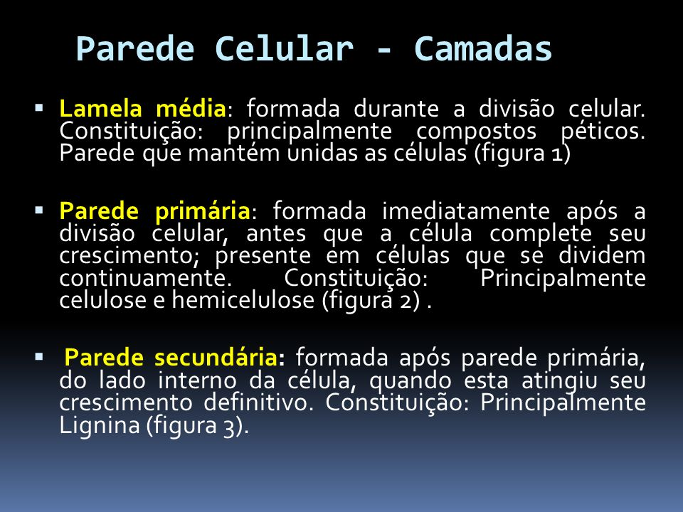 Parede Celular - Camadas