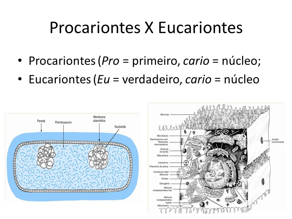 Procariontes X Eucariontes