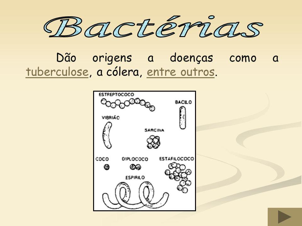 Bactérias Dão origens a doenças como a tuberculose, a cólera, entre outros.