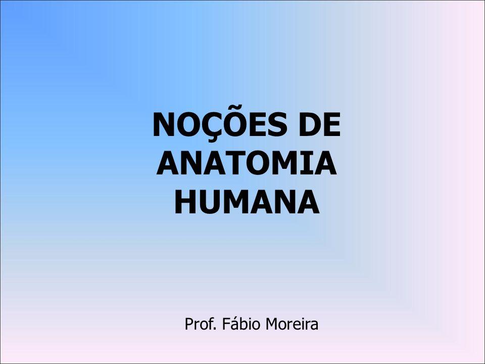 NOÇÕES DE ANATOMIA HUMANA