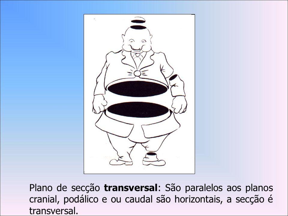 Plano de secção transversal: São paralelos aos planos cranial, podálico e ou caudal são horizontais, a secção é transversal.