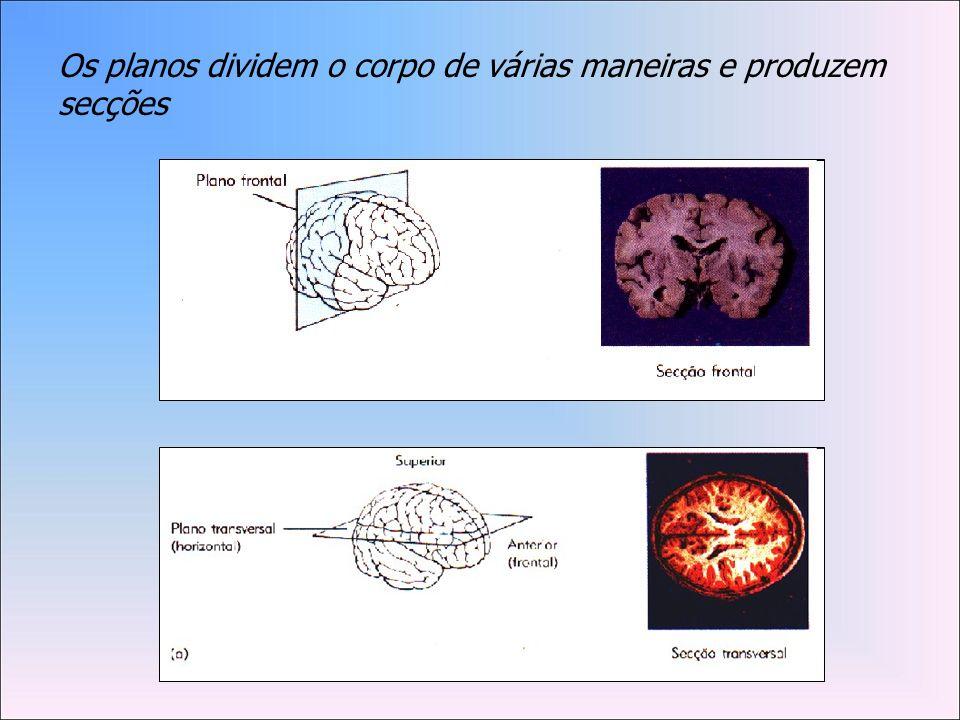 Os planos dividem o corpo de várias maneiras e produzem secções