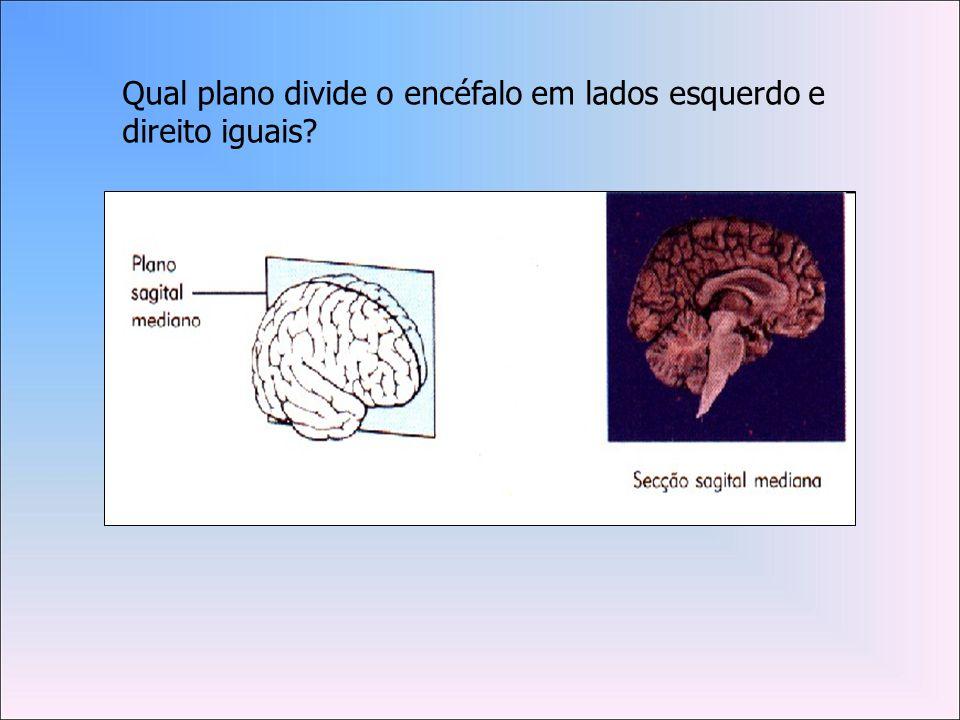 Qual plano divide o encéfalo em lados esquerdo e direito iguais