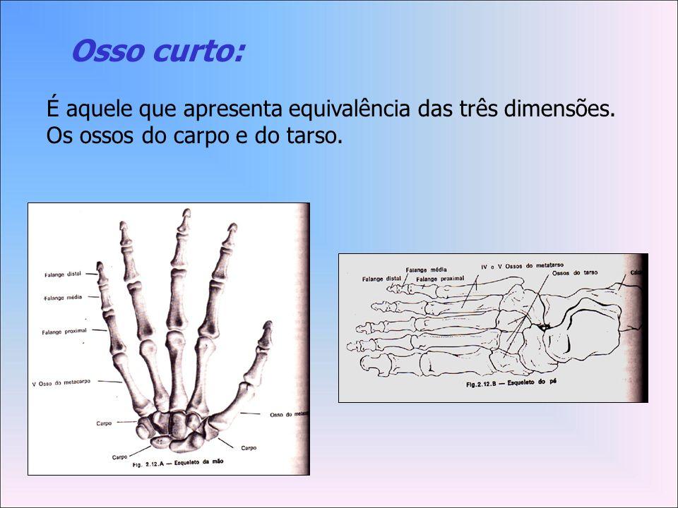 Osso curto: É aquele que apresenta equivalência das três dimensões. Os ossos do carpo e do tarso.