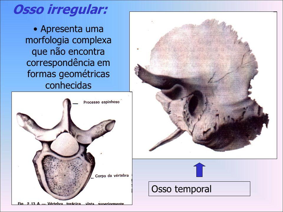 Osso irregular:Apresenta uma morfologia complexa que não encontra correspondência em formas geométricas conhecidas.