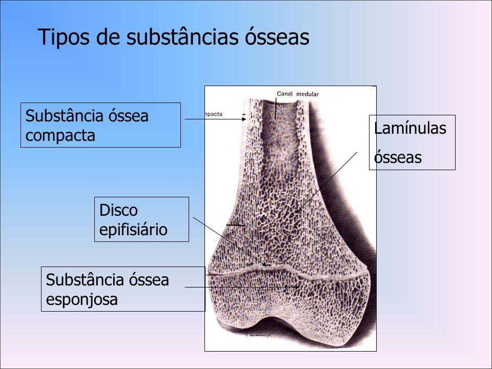 Tipos de substâncias ósseas