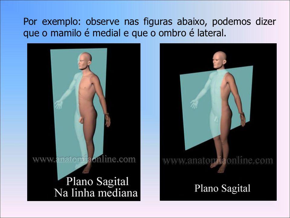Por exemplo: observe nas figuras abaixo, podemos dizer que o mamilo é medial e que o ombro é lateral.