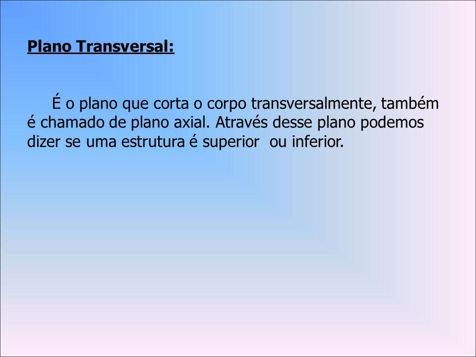 Plano Transversal: