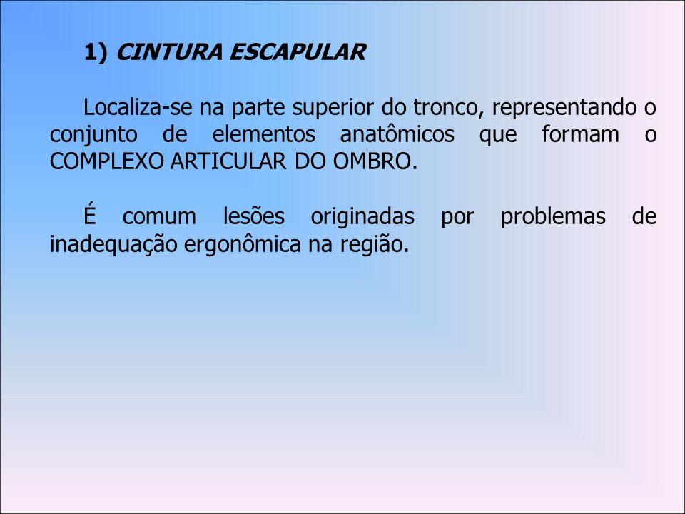 1) CINTURA ESCAPULAR
