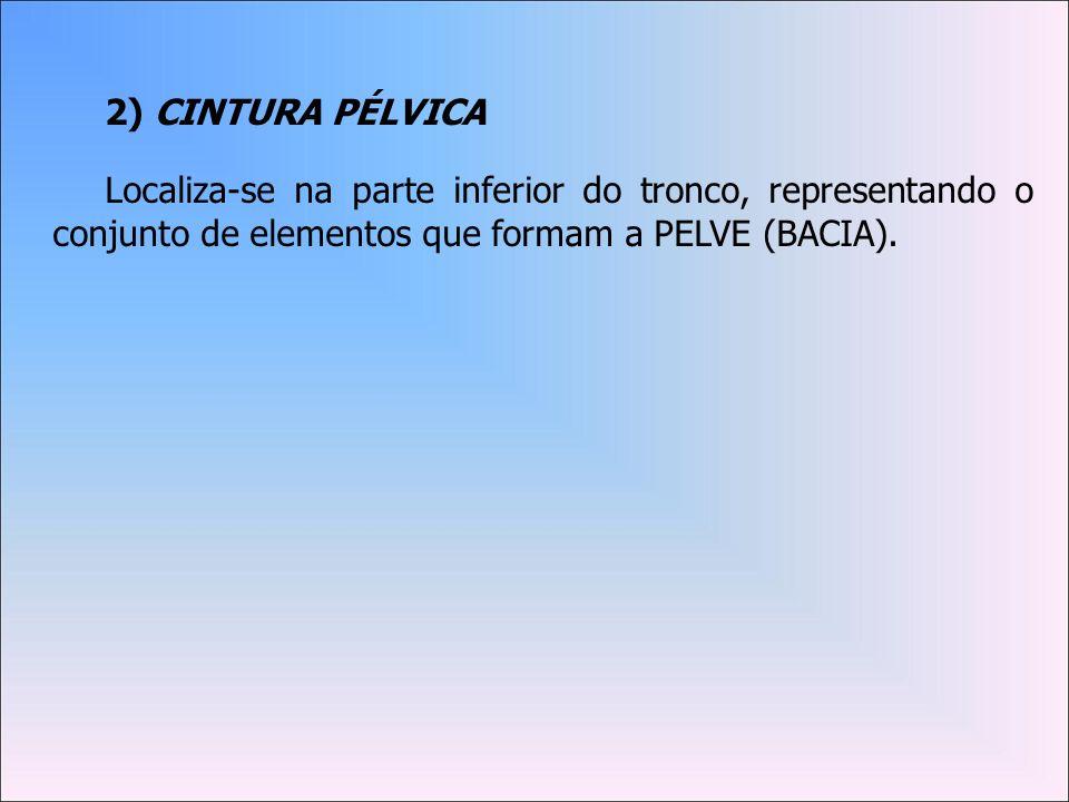 2) CINTURA PÉLVICA Localiza-se na parte inferior do tronco, representando o conjunto de elementos que formam a PELVE (BACIA).