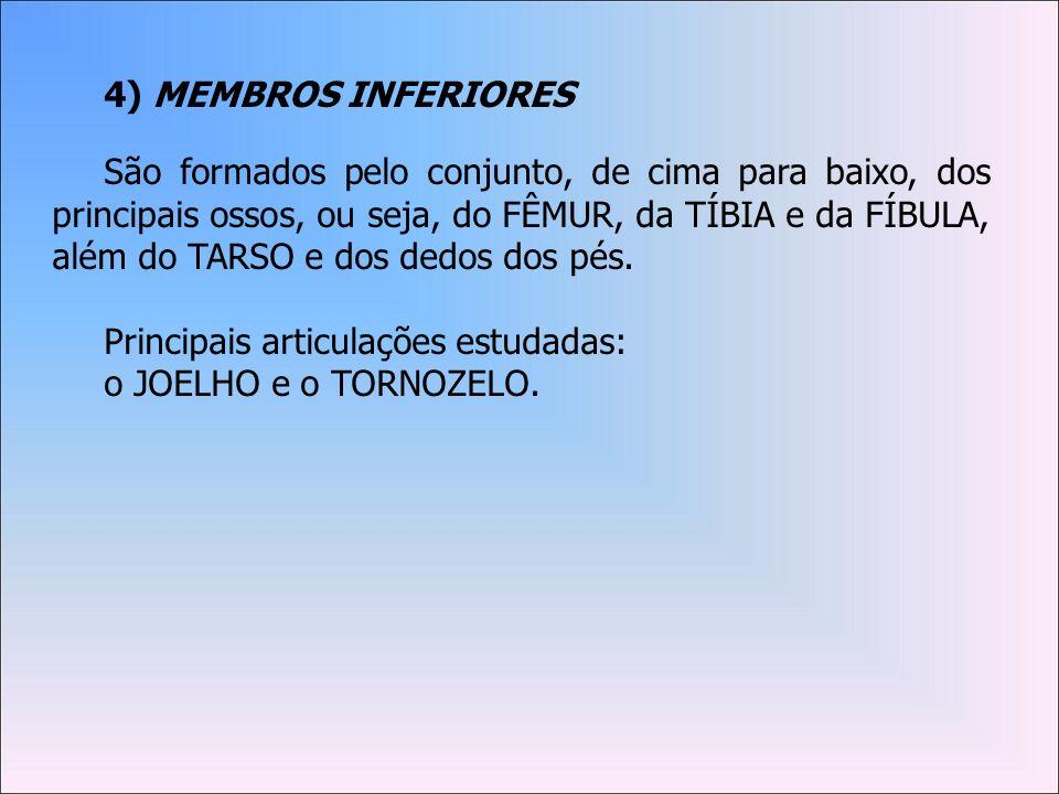 4) MEMBROS INFERIORES