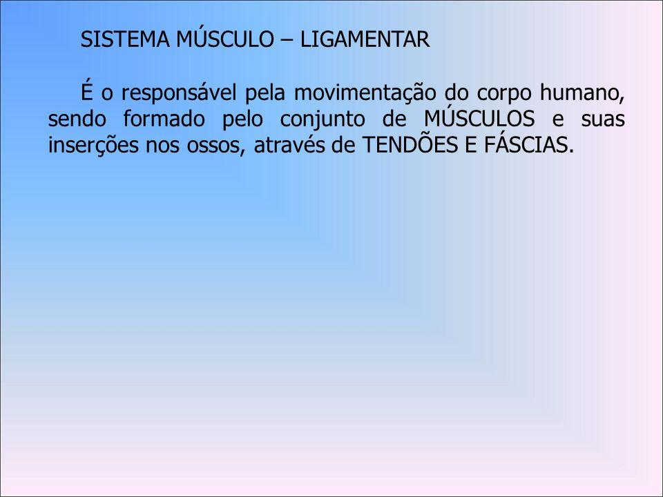 SISTEMA MÚSCULO – LIGAMENTAR