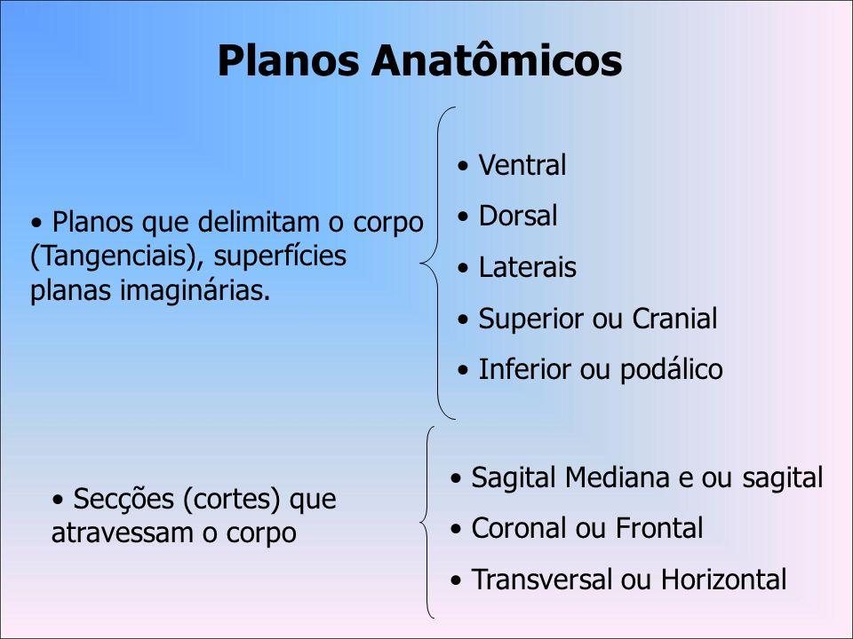 Planos Anatômicos Ventral Dorsal Laterais