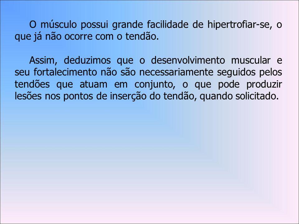 O músculo possui grande facilidade de hipertrofiar-se, o que já não ocorre com o tendão.
